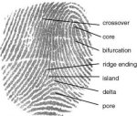 fingerprint_definition