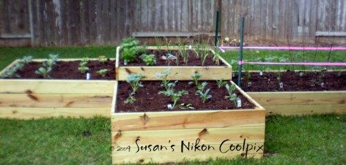 Lisa R's vegetable garden