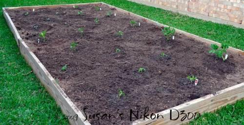 5895-planted-garden