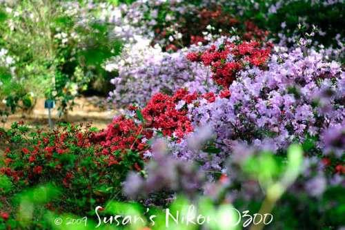 6084-multicolored-azs