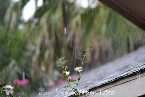 Rain at a faster shutter speed