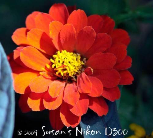 Bainbridge Island flower