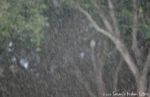 The rain makes the trees look gloomy. (f/2.8, 1/320th, ISO 200)