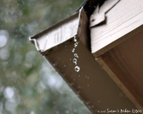 Drip drop, drip drop (f/3, 1/500th, ISO 200)