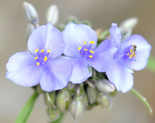 Purple is a popular color for wildflowers.