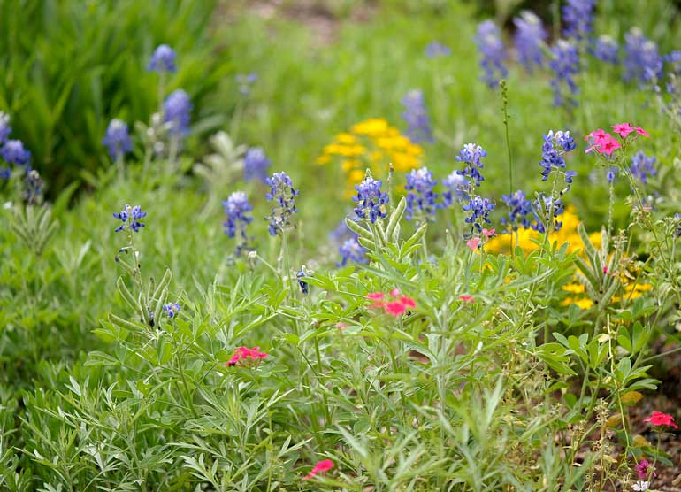 Wildflower Ideas | Pretty Garden Tips