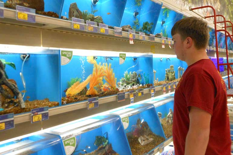 Petsmart random snippets apertures for How much are fish at petsmart