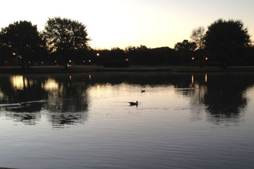 Ducks make ripple on one of our community's lakes this morning.