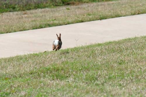 Bye, bye, bunny!
