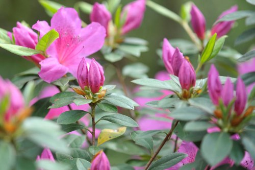 Buds bring the promise of more beautiful flowers.