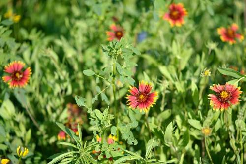 Indian blankets add lovely pops of color.