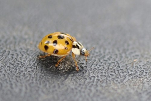 I found this little, orange critter crawling on our recycling bin yesterday.