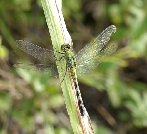 A dragonfly blends in with the scenery at Imperial Park.