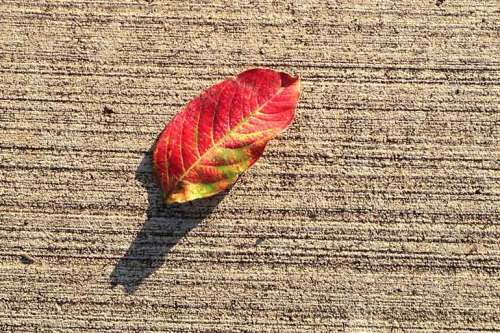 Seeing this autumn leaf made me hope that cooler temps are right around the corner.