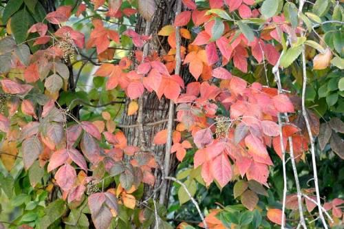 It looks like fall at Eastham-Thomason Park in Huntsville.