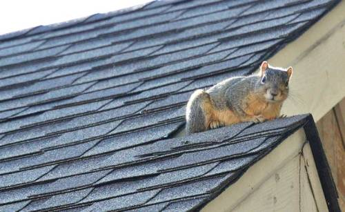 A grumpy squirrel on our roof refused to back down.