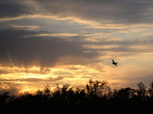 Birds add to the sunset.