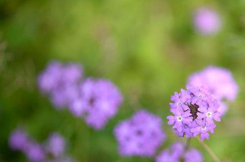 Love the bright purple phlox.