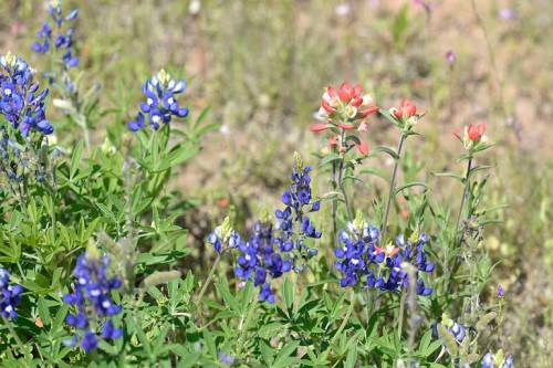 Two of my favorite wildflowers
